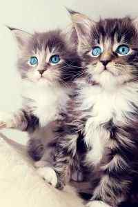 超萌可爱小猫咪搞笑表情特写高清手机壁纸