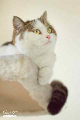 呆萌可爱的猫咪唯