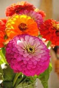 鲜艳的花朵唯美高清手机壁纸