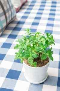清新室内绿色盆栽高清手机壁纸