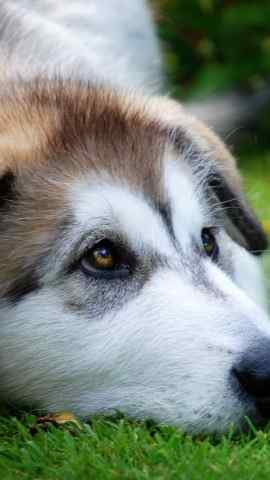 可爱狗狗图片超高