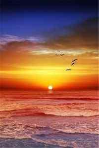 唯美夕阳风景高清手机壁纸