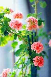 娇艳盛开的唯美花卉植物高清手机壁纸