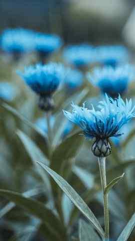 唯美花卉静物高清