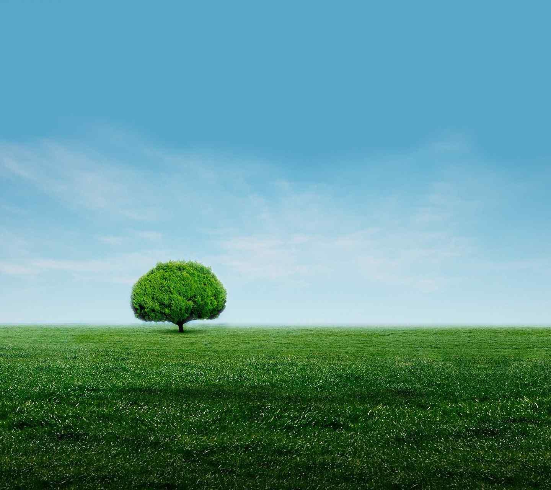 夏日树木唯美高清手机壁纸