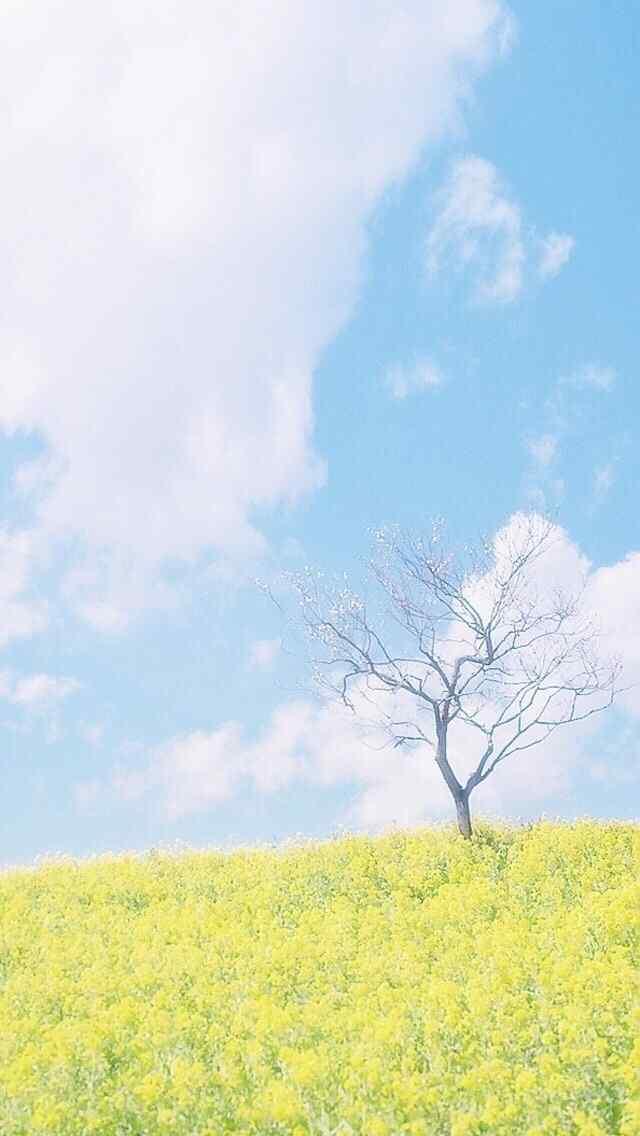 清新植物风景图片高清手机壁纸高清图片