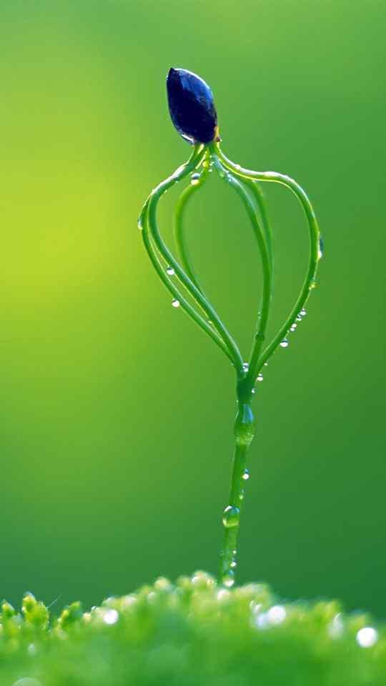 小清新春天嫩芽生机勃勃绿色护眼高清手机壁纸