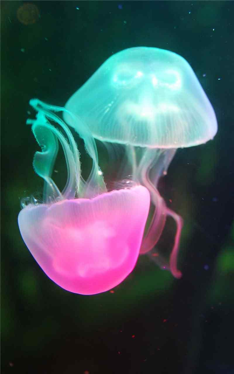 美丽神秘的海底生物水母高清手机壁纸图集