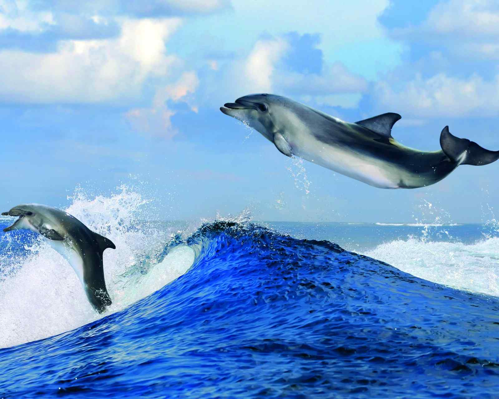 可爱动物海豚图片高清手机壁纸下载