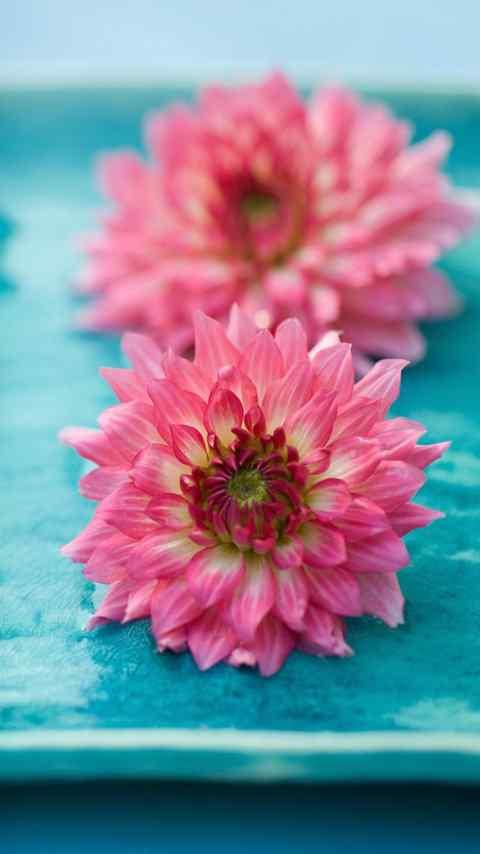 可爱美丽的蝴蝶花朵高清手机壁纸