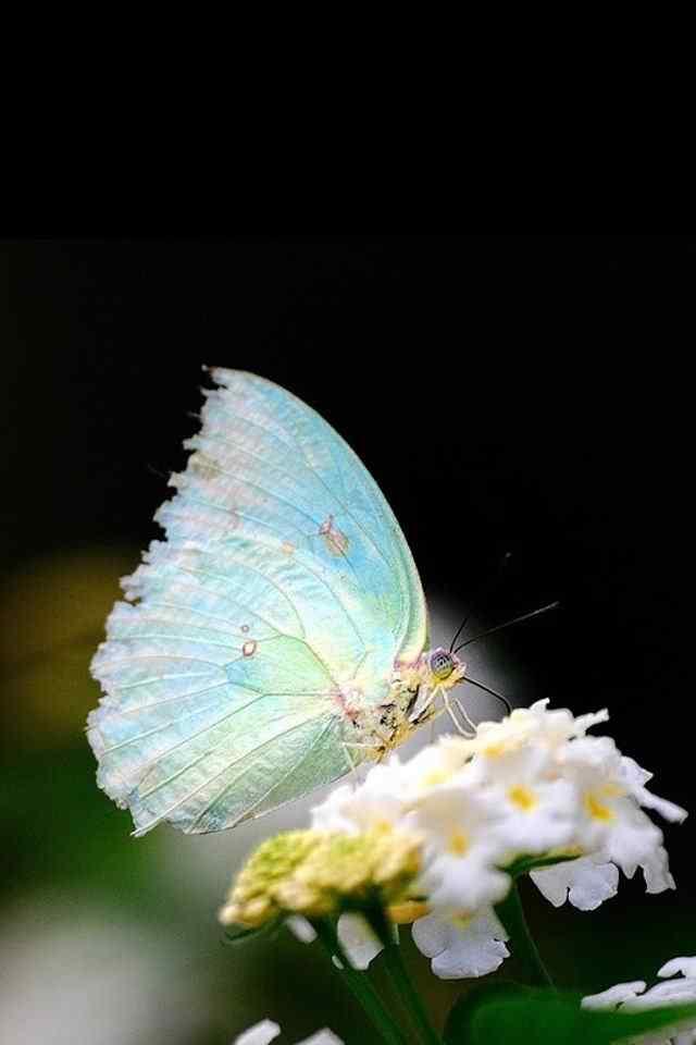 彩色美丽的蝴蝶高清手机壁纸