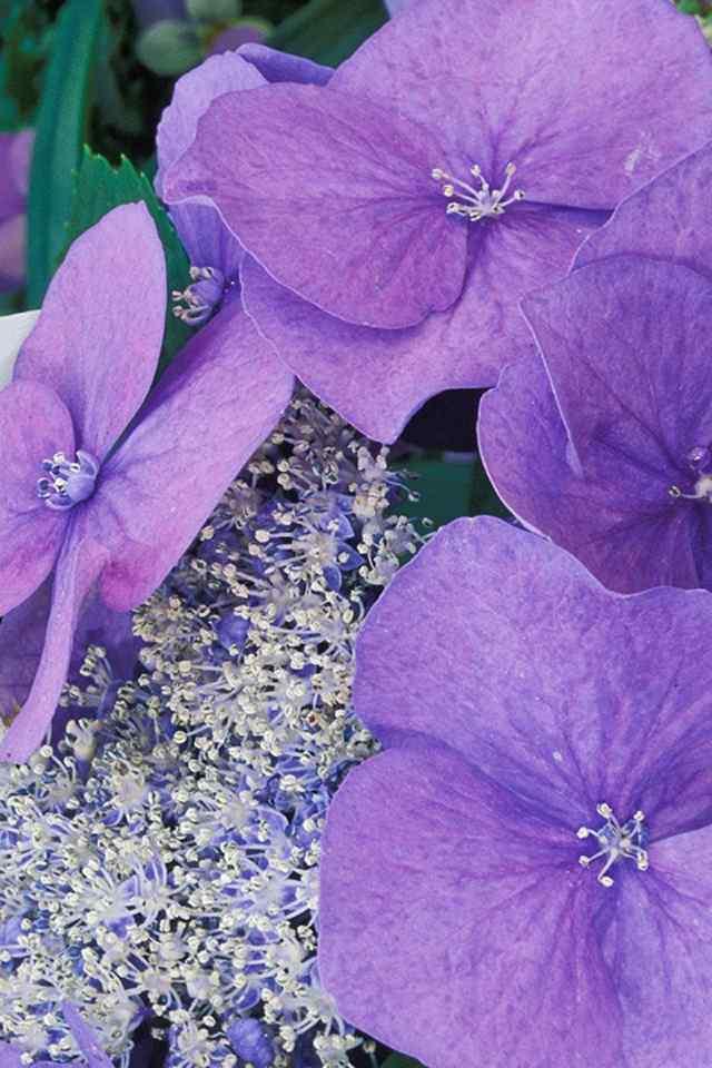 色彩鲜艳的唯美花朵摄影高清手机壁纸