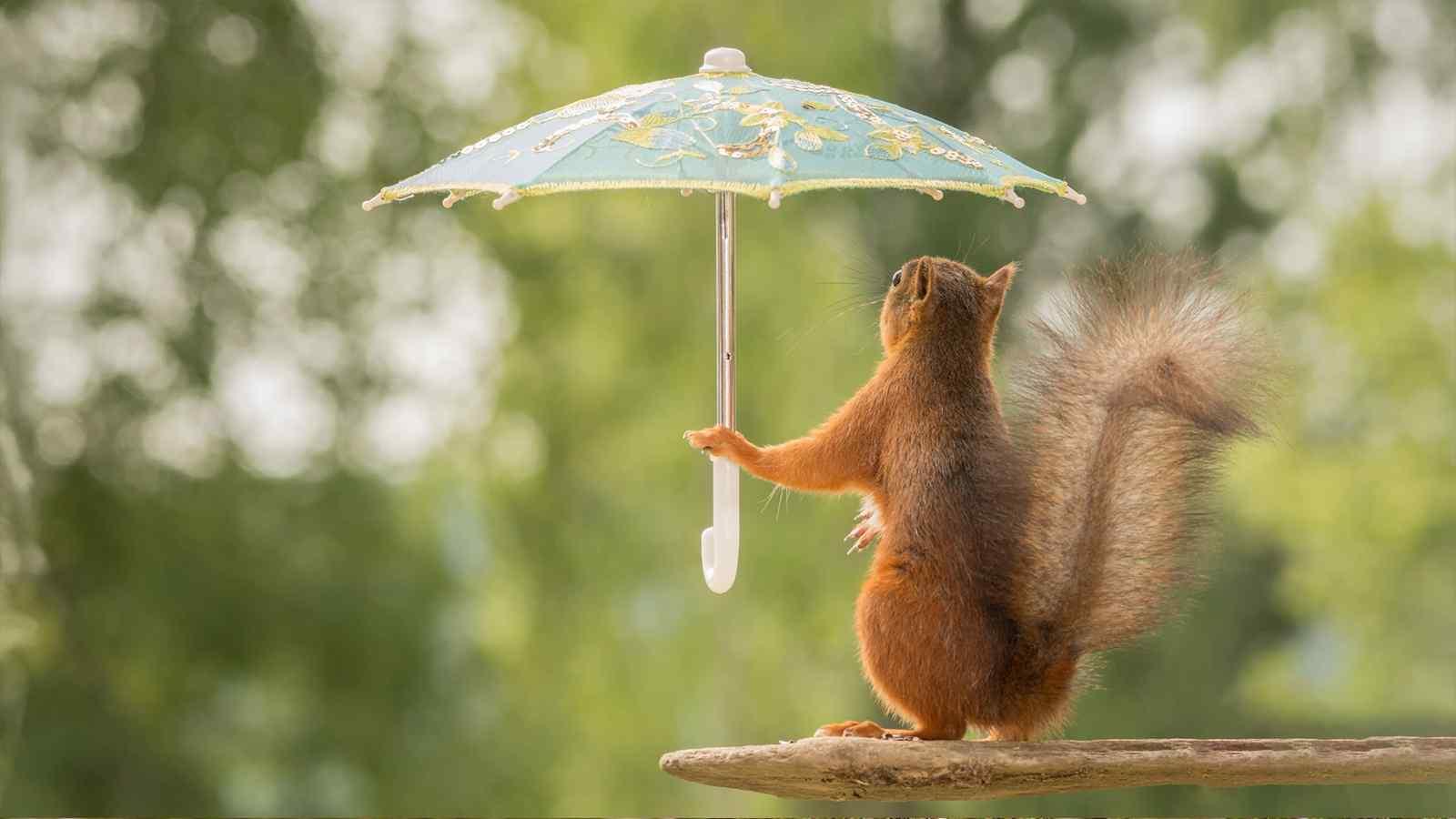 可爱的小松鼠图片桌面壁纸