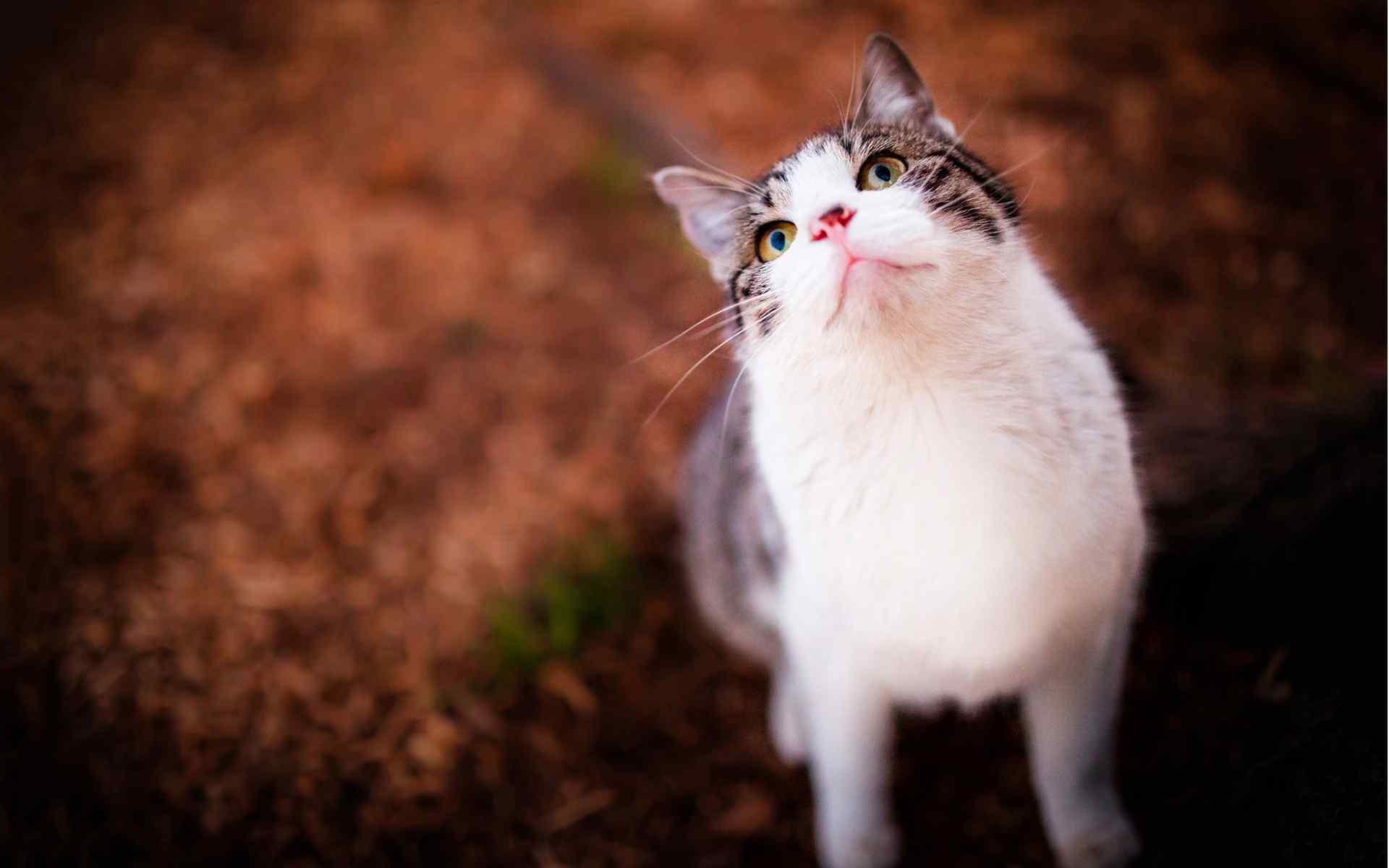壁纸 动物壁纸 > 呆萌可爱的猫咪桌面壁纸