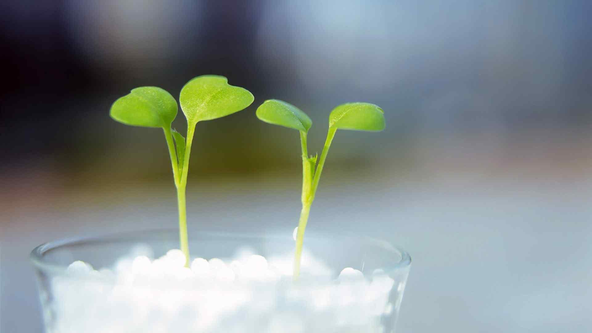 植物嫩芽绿色高清电脑桌面壁纸