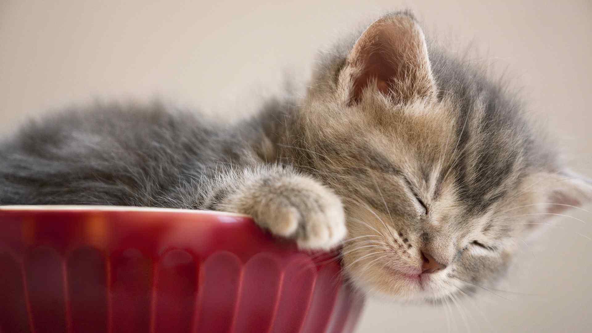 呆萌可爱的小猫咪电脑壁纸