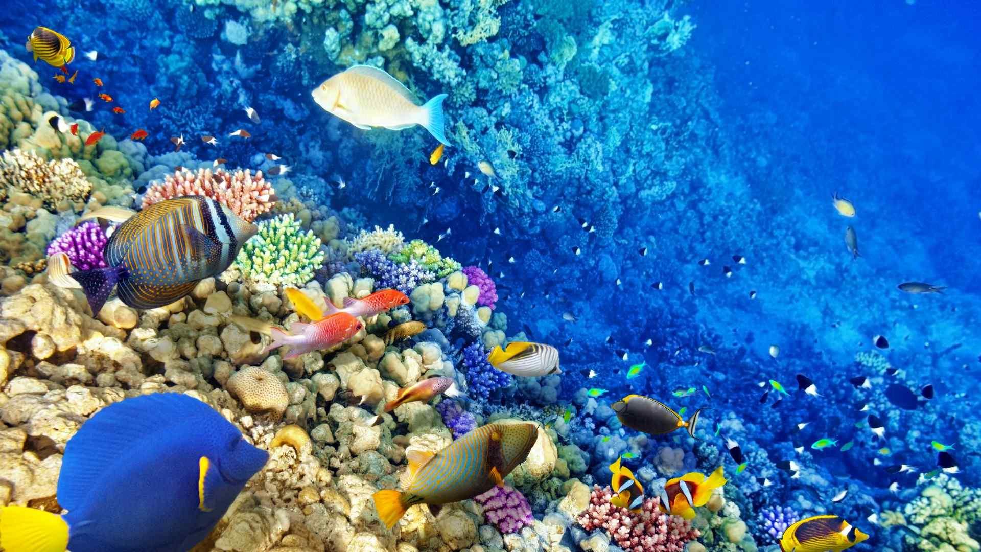 蓝色海洋美丽的海底世界壁纸
