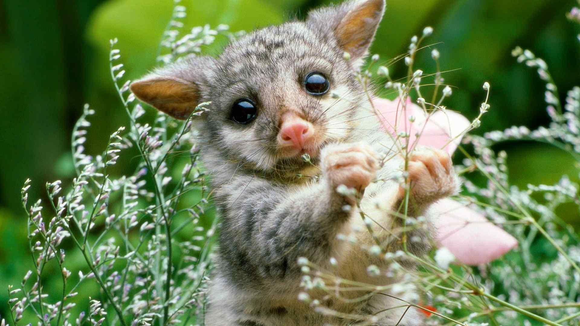 自然界有许许多多可爱的动物哟