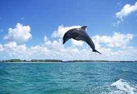 海底世界海豚特写图片壁纸 第一辑