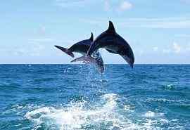 海底世界海豚特写图片壁纸 第二辑