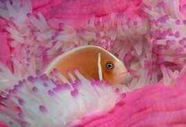 大洋海底世界唯美珊瑚电脑桌面壁纸