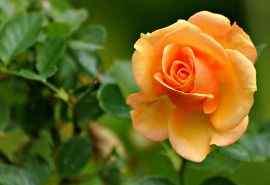 唯美花卉图片电脑