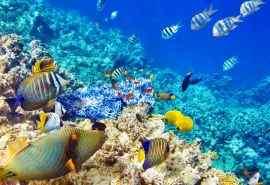 海底世界鱼群摄影高清图桌面壁纸