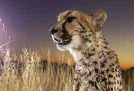 非洲草原的动物们电脑桌面壁纸图片下载
