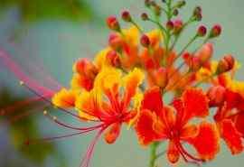 微距鲜花摄影桌面
