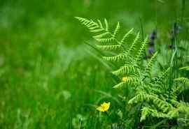 清新植物绿色护眼高清电脑壁纸