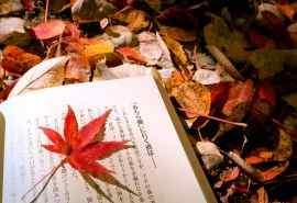 红色枫树唯美自然风景电脑桌面壁纸