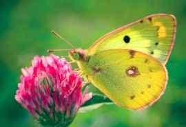 红花蝴蝶兰图片高