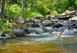 森林深处溪流自然