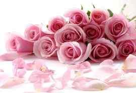 粉色玫瑰花图片壁纸下载