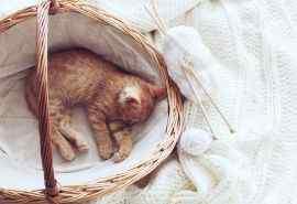 可爱猫咪萌宠壁纸