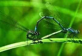 蜻蜓特写高清桌面壁纸第二辑