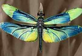 蜻蜓特写高清电脑桌面壁纸