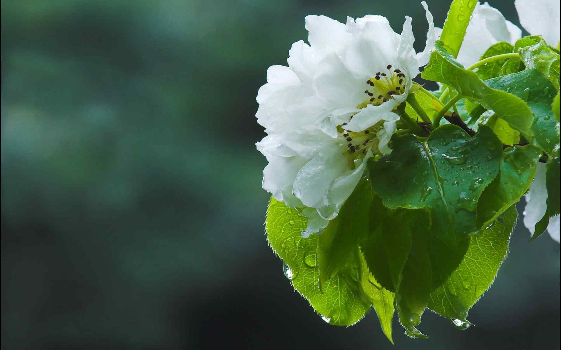 清新植物绿色护眼高清桌面壁纸图片