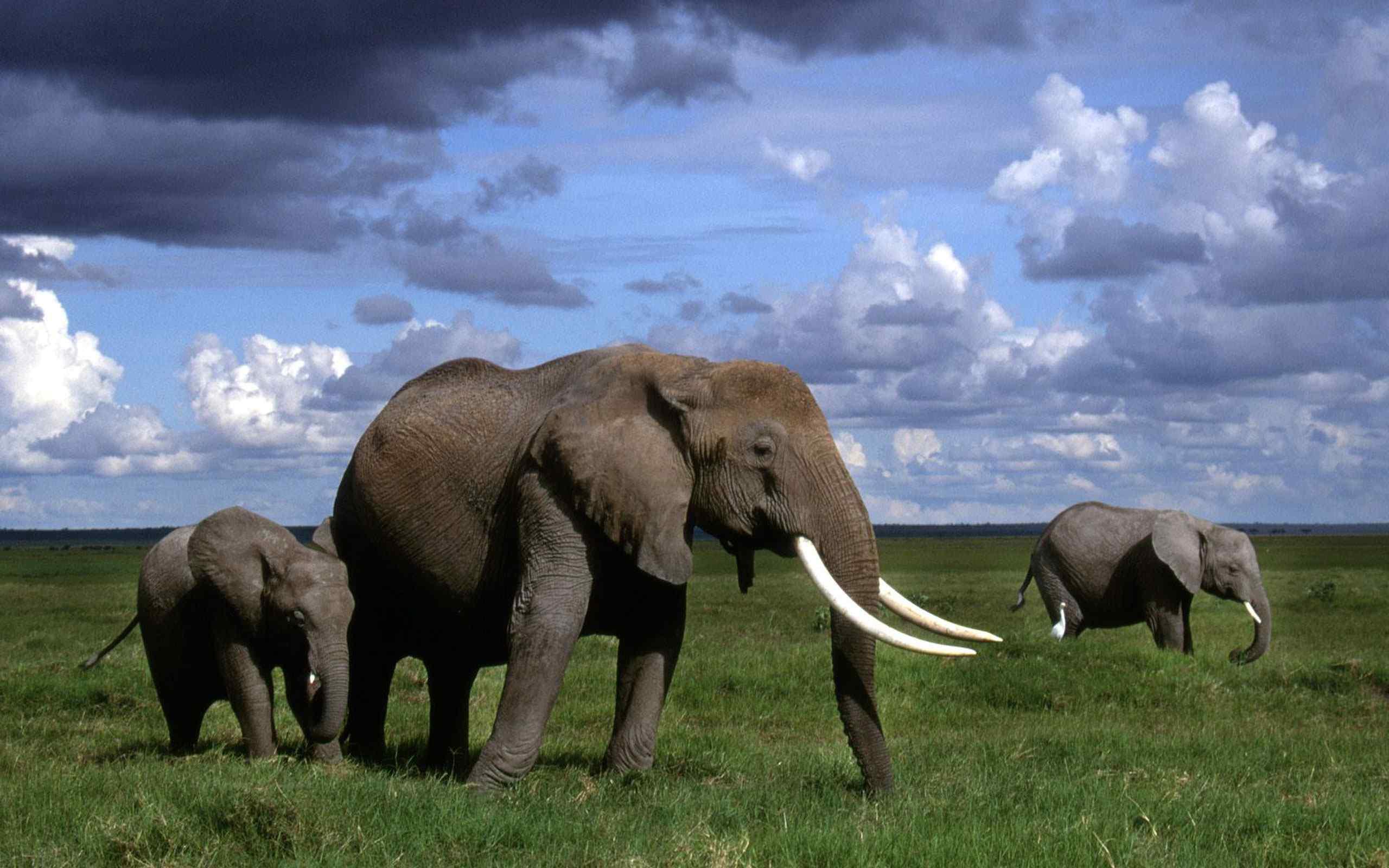 一头大象带着小象在草原行走,他们一路行走,一路觅食,长长的鼻子,大大的耳朵,高大的身材,非洲人都喜欢骑在大象背上,要是你也非常喜欢大象,那就到桌面天下下载,记得分享给你的好朋友!桌面天下为您提供明星、美女、游戏、卡通、系统壁纸等,桌面天下把这套桌面壁纸推荐给您,让您更快的找到您想要的桌面壁纸!