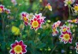 非主流花朵高清电