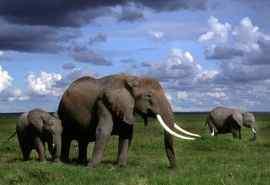 非洲肯尼亚大象壁