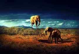 非洲野生动物大象