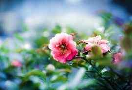 唯美花卉摄影特写图片电脑桌面壁纸下载