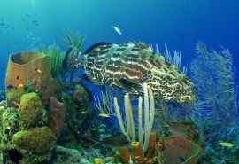 热带海底世界高清壁纸第一辑