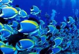 热带海底世界高清壁纸第二辑