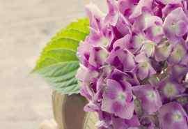唯美花卉繁华处处图片电脑桌面壁纸下载