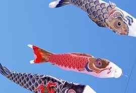 日本鲤鱼旗高清图