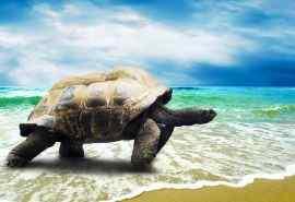 可爱海洋生物海龟图片桌面壁纸