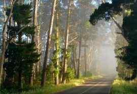 唯美绿色森林风景