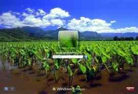 清新荷塘风景XP登录界面